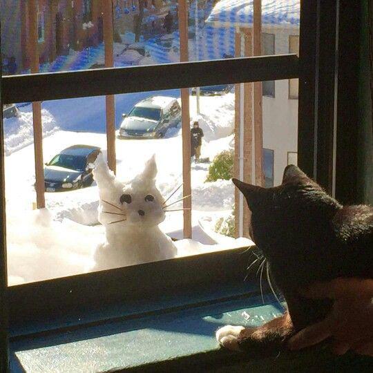 1009 best Ha!ha! images on Pinterest Fluffy pets, Funny animals