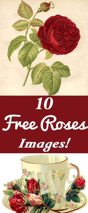 10 Free Vintage Roses Images - Gorgeous! - The Graphics Fairy
