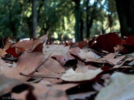 tappeto di foglie #autumn Villa Borghese