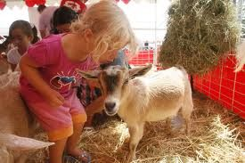 Kiss a goat! Petting zoos teach children a lot about animals - rent a petting zoo for a party or event, book now in Orange County CA   Orange County CA and surrounding areas like Santa Ana, Anaheim, Newport Beach, Irving, LA and more!