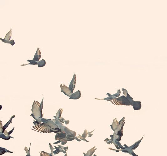 a beautiful image of birds taking flight from @Max Wanger