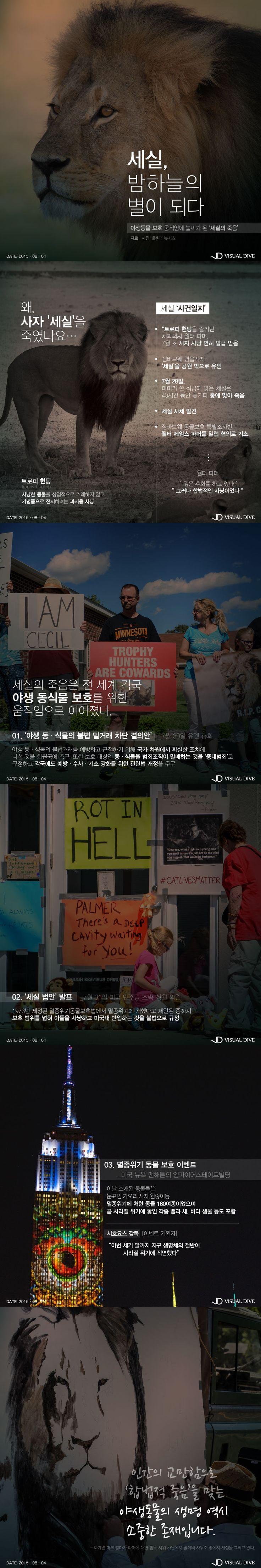 세실의 죽음…야생동물보호 운동의 불씨가 되다 [카드뉴스] #Animal / #Infographic ⓒ 비주얼다이브 무단 복사·전재·재배포 금지
