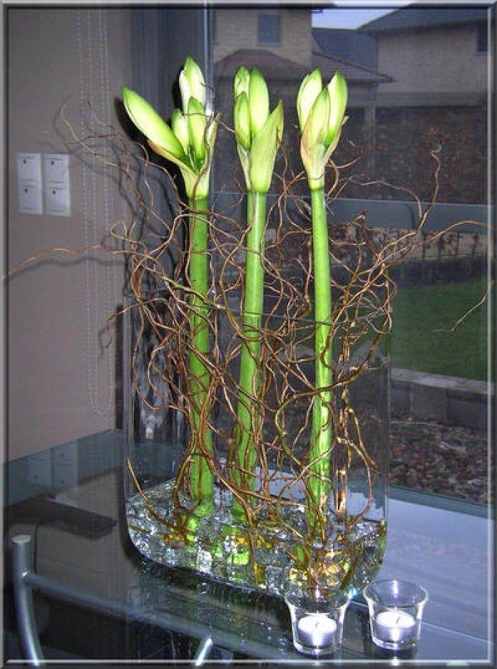 Mooi met maar 3 bloemen Stokje in de steel van de amaryllis, en hij blijft mooi recht op staan!