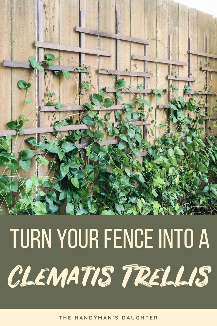 DIY Woodworking Ideas Turn a boring flat fence in a clematis trellis for just a few dollars! Create a ...