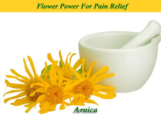 Arnica is flower power for aches, pains, bumps, bruises, as well as black and blue marks. Use it in homeopathic form or as a topical remedy for fast relief.