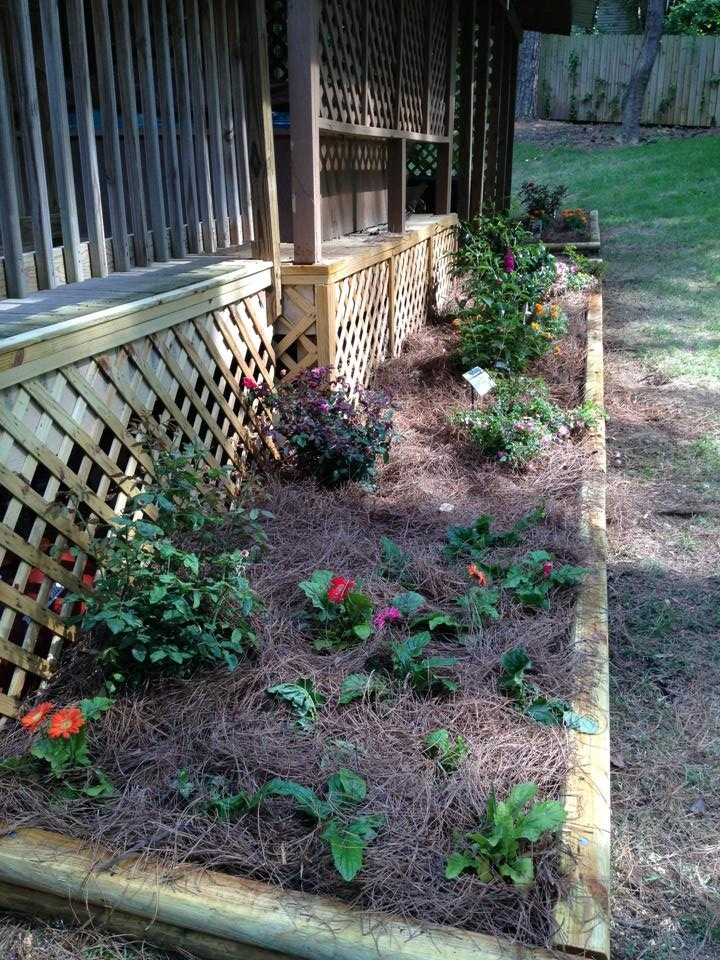41 best images about plants non toxic to dogs on pinterest for Low maintenance perennial flower bed