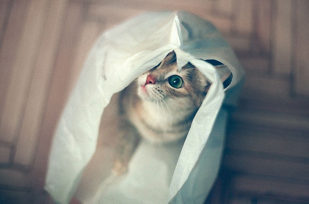 =^_^=Film, Plastic Bags, Kittens, Foxes, Cat Bags, So Funny, Kitty, Cat Lovers, Animal
