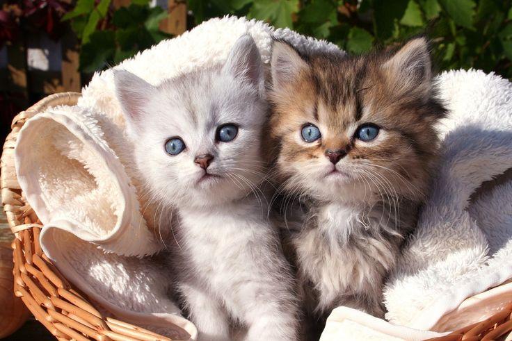 Dzień dobry, witamy piąteczek :D  #piąteczek #dziendobry #cat #kotki #fototapeta24pl
