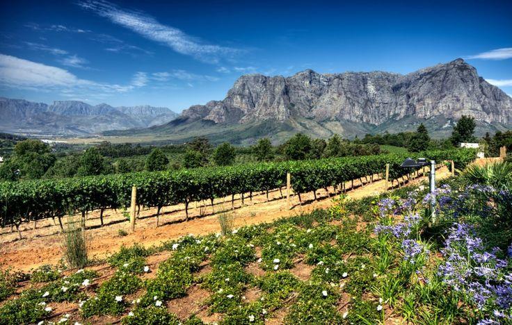 Vignobles de Stellenbosch depuis Le Cap