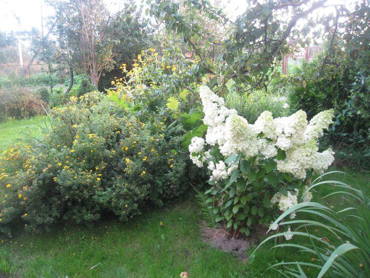 pan. Magical Moonlight до 2 метров, зеленые-белые соцветия