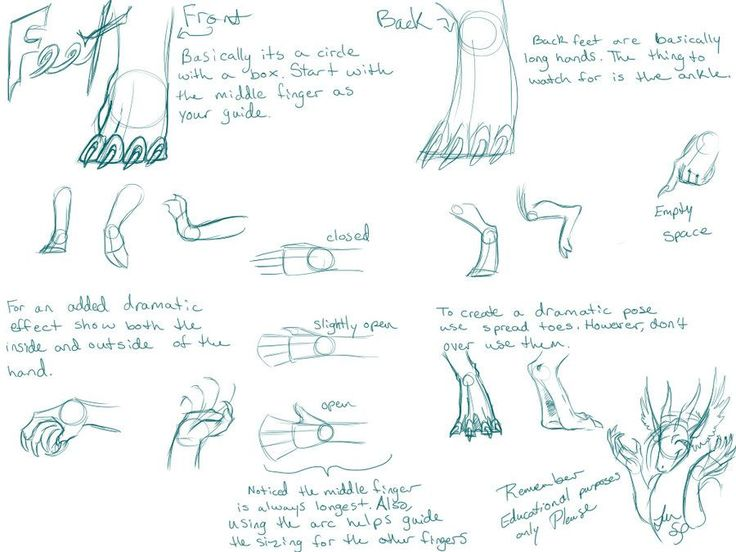 26 best images about How To Draw Dragon Feet and Dragon ...