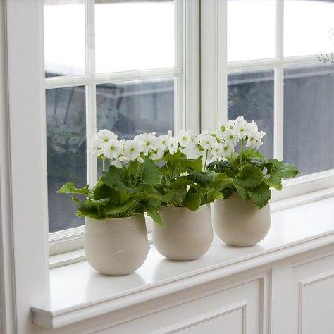 Vilka växter passar din fönsterbräda? | Blomsterlandet.se