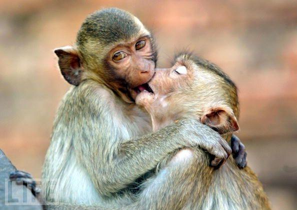 love animals monkey in - photo #37