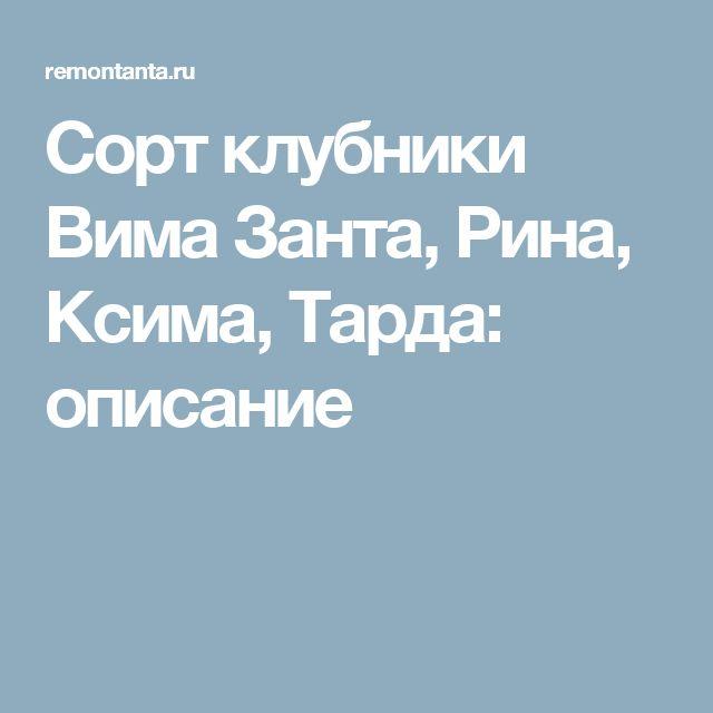 Сорт клубники Вима Занта, Рина, Ксима, Тарда: описание
