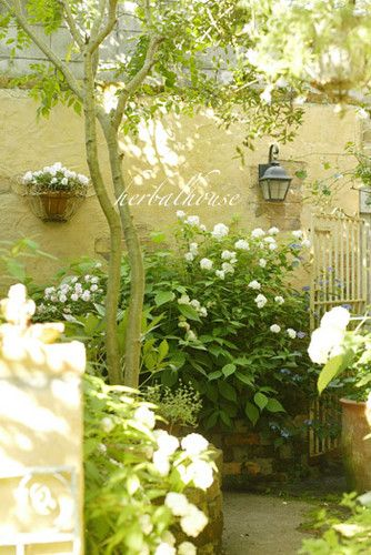 Creamy yellow walls and garden of white flowers
