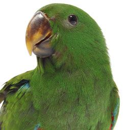 The following medical tests — complete blood count test, the plasma chemistry panel test, the bile acids test, psittacosis test, radiographs, ultrasound, CT scan, MRI tests — are must-haves for your pet bird.