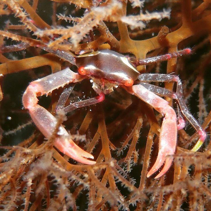 "one word to describe scuba diving ""beautiful"" Grand Luley Resort Manado www.luleyhotels.com"