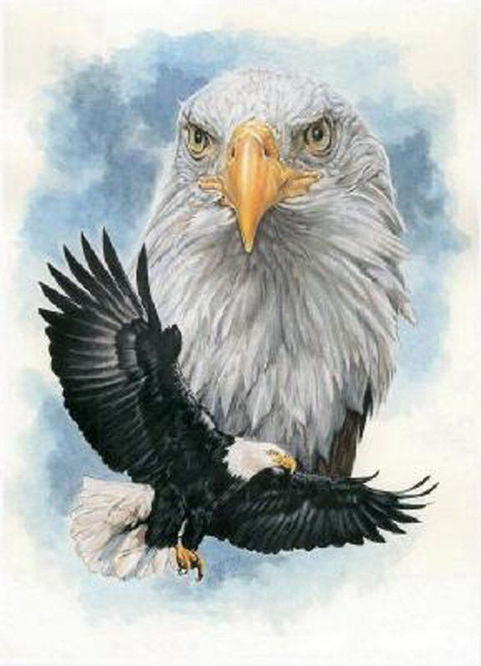 an in depth look at the american bald eagle Taxonomy the genus haliaeetus, the sea eagles (in latin, hali means salt and aeetus means eagle), includes eight of the sixty species of eaglesthe sea eagles live along sea coasts, lakes, and river shores (gerrard and bortolotti, 1988.