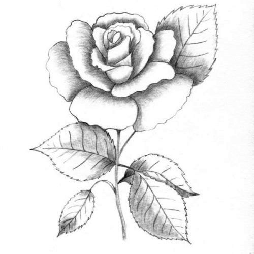 Trandafir in creion