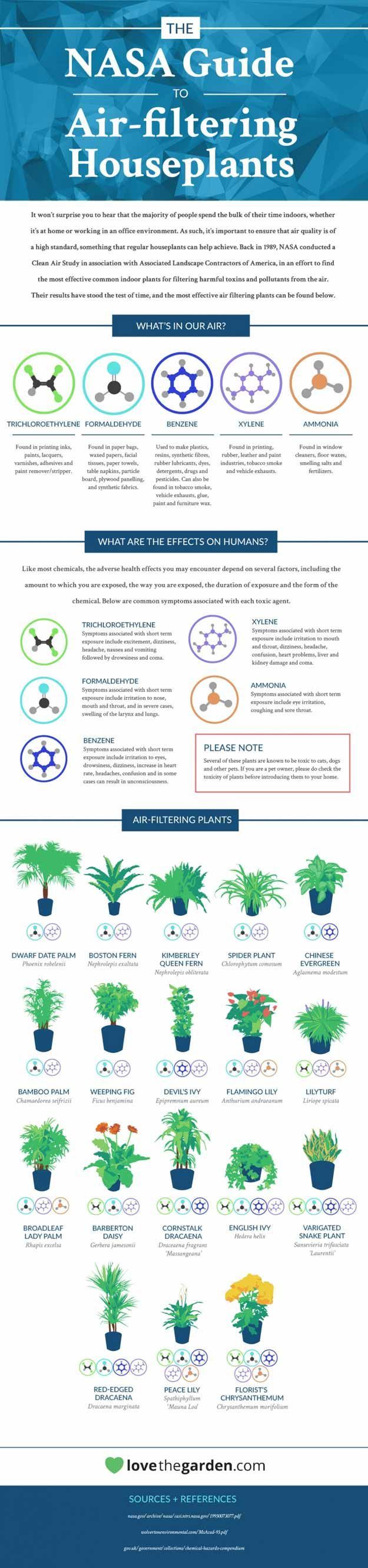 NASA's Guide to Air Purifying Plants | Best Plants to Prevent Air Pollution  by Pioneer Settler at http://pioneersettler.com/air-purifying-plants/