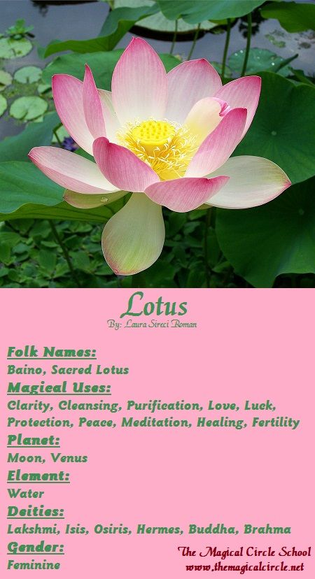 Lotus Magical Properties - The Magical Circle School - www.themagicalcircle.net