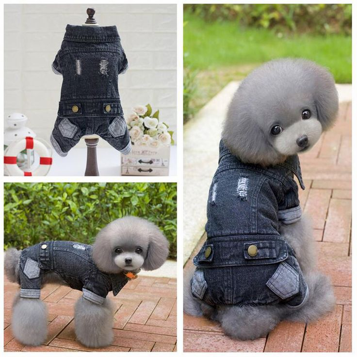 Autumn Winter Pet Dog Clothes Black Jean Four Legs Dog Coats Puppy Dog Jacket Costume Size S-XXL For Teddy Chihuahua Pet Product #Affiliate