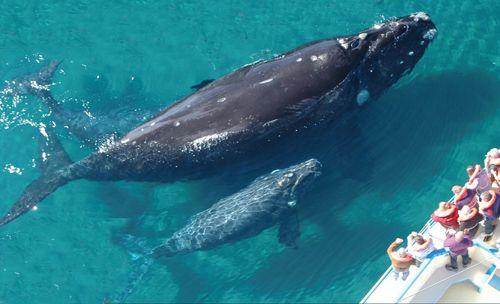 peninsula valdes Península de Valdés en Patagonia: ballenas, pingüinos, elefantes y lobos marinos