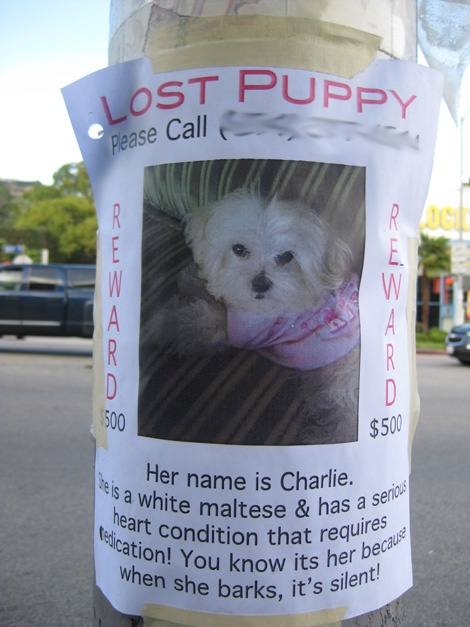 36 best Lost Dog Notices images on Pinterest DIY, Friends and - lost dog flyer examples