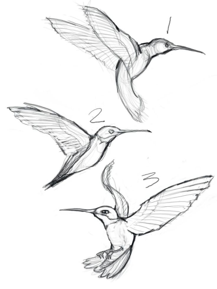 Hummingbird And Flower Drawing