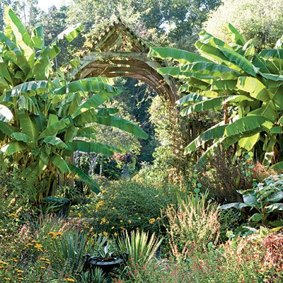 39 best gardening gardens in north carolina images on for Landscaping plants south carolina