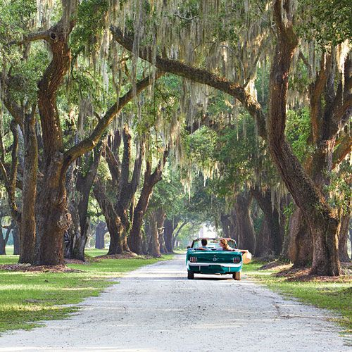 Moss-draped oaks line a road near Charleston, South Carolina. Photography by Chris M. Rogers, via Southern Living.