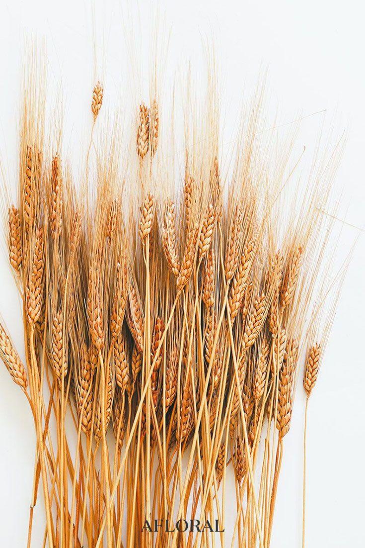 Burnt Orange Wheat Bundle 8 Oz Bunch 30 Tall Wheat Decorations Rustic Wedding Decor Diy Dried Flowers