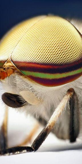 Ojo compuesto de insecto.