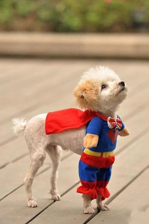 Superhero puppy too funny