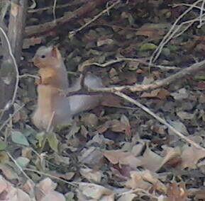 Mysterious white squirrel spotted a sczoo creatures that rock