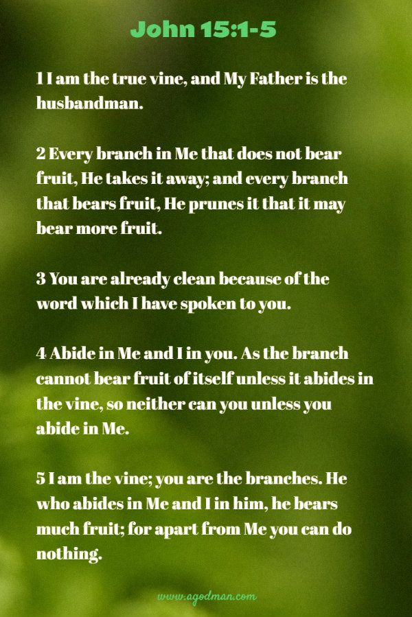John 15:1-5 1 I am the true vine, and My Father is the husbandman. 2 Every branch in Me that does not bear fruit, He takes it away; and every branch that bears fruit, He prunes it that it may bear more fruit. 3 You are already clean because of the word which I have spoken to you. 4 Abide in Me and I in you. As the branch cannot bear fruit of itself unless it abides in the vine, so neither can you unless you abide in Me. 5 I am the vine; you are the branches. He who abides in Me and I in…