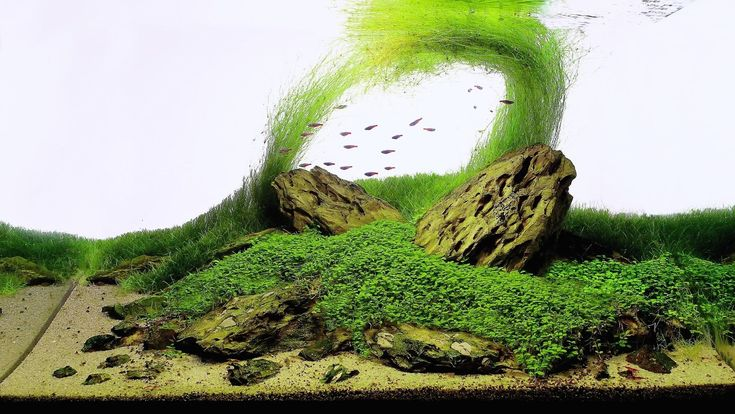 Raise The Roof 3 Advantages Of Aquascapes With Natural