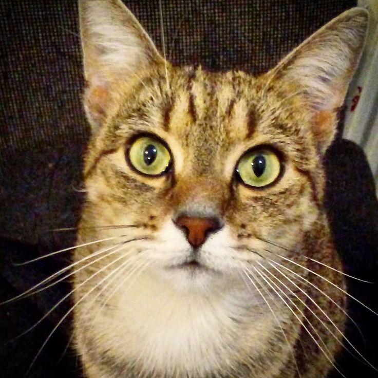 "55 aprecieri, 1 comentarii - Floraria Dorothy's (@florariadorothys) pe Instagram: ""Green eyes.. #grigore #catintheflowershop #clujcats #napocats #catsofcluj #cluj #clujnapoca…"""