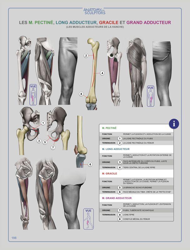 166 best anatomy images on Pinterest | Art tutorials, Drawing ...