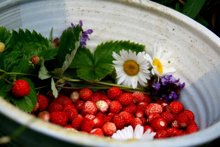 June in Finland...wild, sweet strawberries are everywhere!
