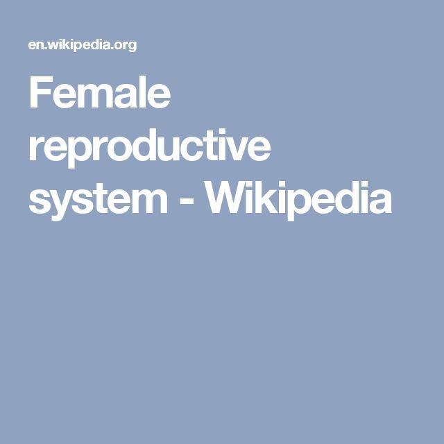Female reproductive system - Wikipedia