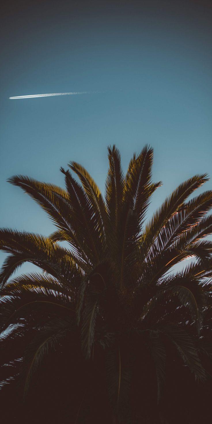 Beautiful coconut treee sky