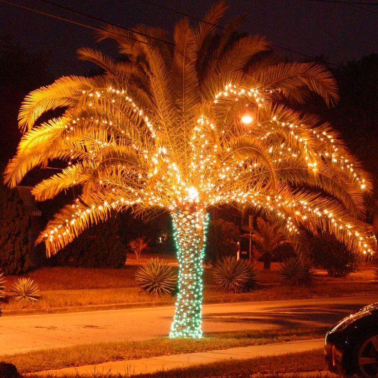 Christmas Tree Made Of Christmas Lights: Christmas Lights On Palm Trees Are A Great Way To Show