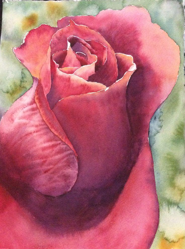 Rose Bud. Watercolour