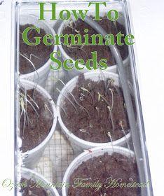 Ozark Mountain Family Homestead: Seed Germination in Three Days