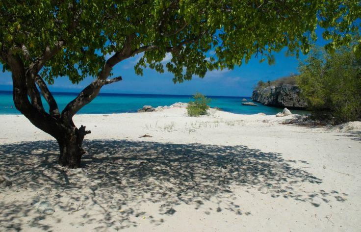 Daaibooi, Curacao www.BijBlauw.com