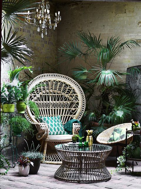 peacock chair + potted plants