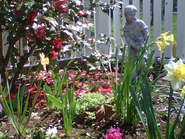 March 2013 Camelia, Daffodils, and Hyacinth