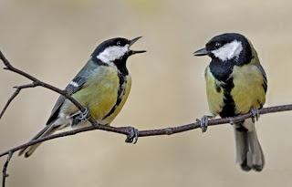 Aww - beautiful photo of these great tits! #birdwatch #pinittowinit