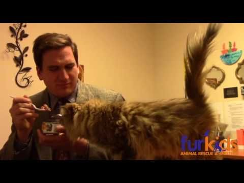 Animal Shelter Makes Hilarious LowBudget Cat Commercial That Ends - Animal shelter makes hilarious low budget cat commercial that ends up going viral